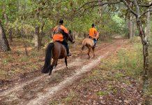 Equipage à cheval lors de cette battue dans le Médoc