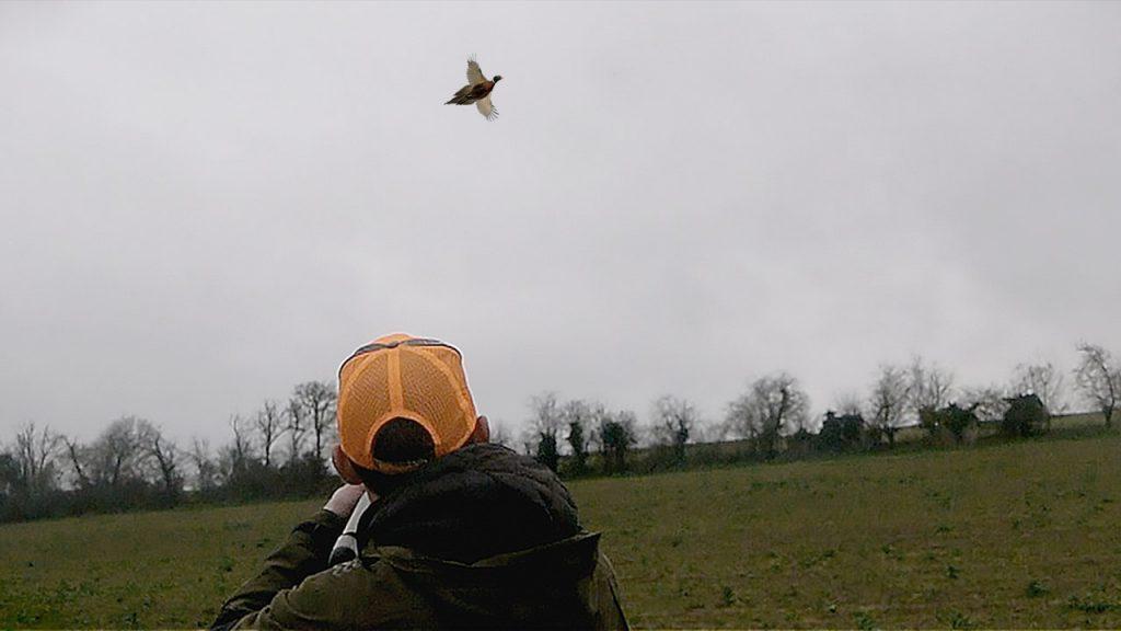 tir d'un faisan lors d'une chasse aux petits gibiers dans le Nord