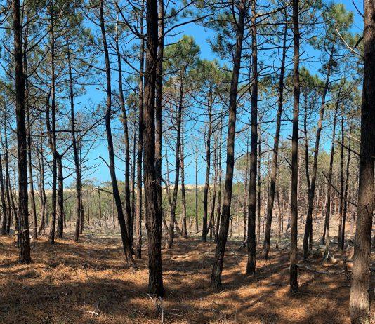 Forêt domaniale de Lacanau